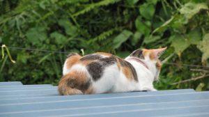 cat20160728