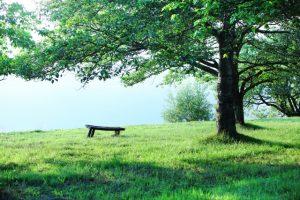 bench20160801