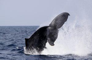 whale2-20161021