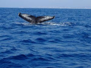 whale20161021