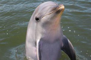 dolphin2-20161210