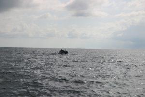 dolphin3-20161210